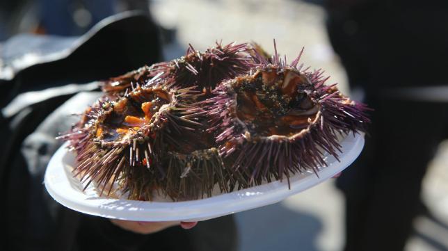 Un plato de erizos como el que se degustará en la erizada.